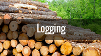 logging-industry